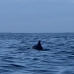 20090809 Dolphin